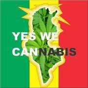 cannabis tunisie